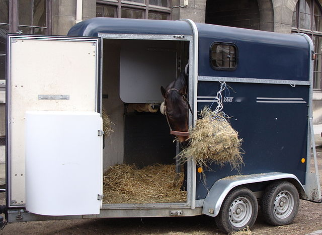 Photograph of horse in a horse trailer