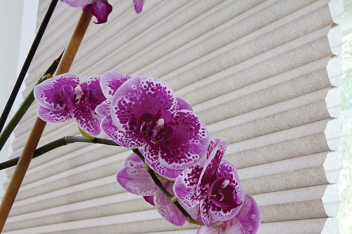 A purple orchid contrasts a close up shot of cellular shades and their unique insulating cells
