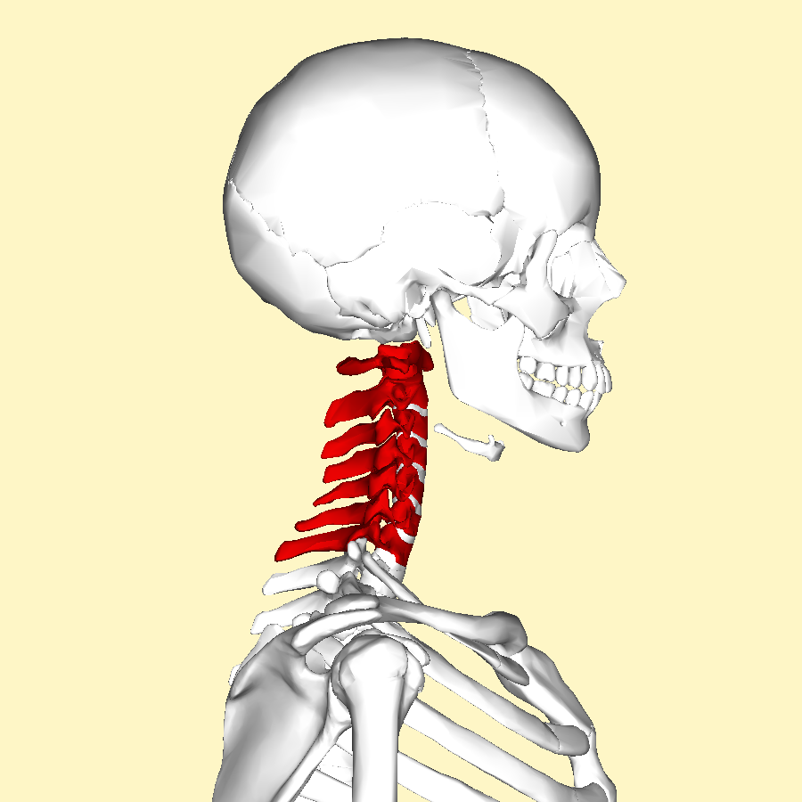 Cervical_vertebrae_lateral.png