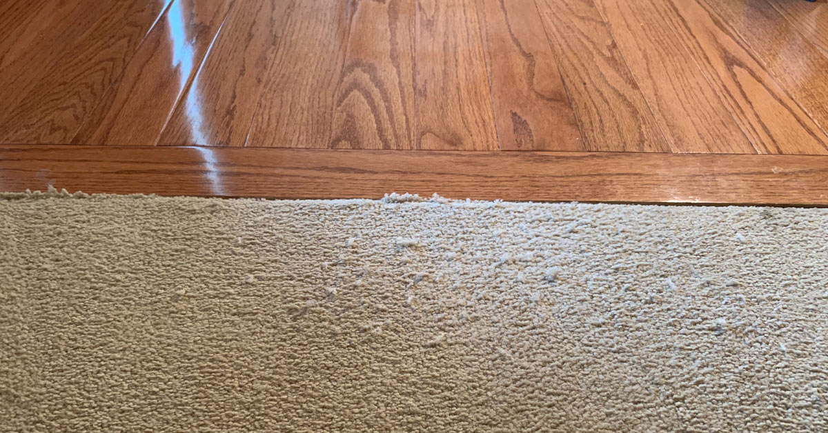 Plush carpet with pet damage and in need of transition repair