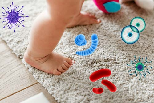 Germs can hide in your carpet