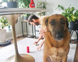 Cleaning pet stains and odors out of an area rug