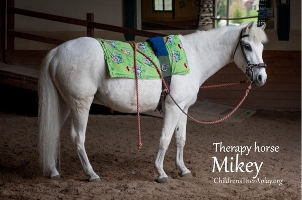 Therapy horse Mikey