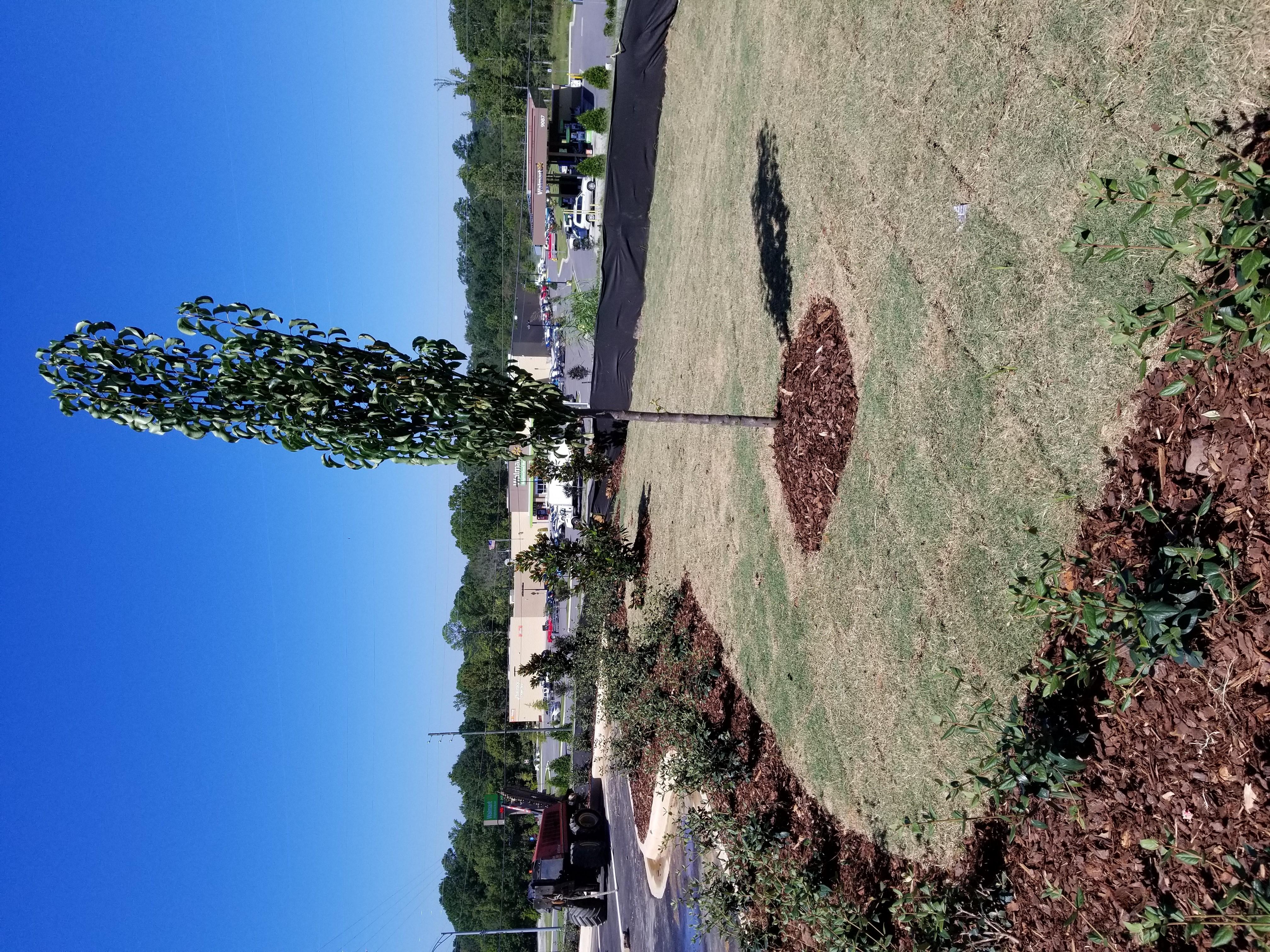 Alabaster Landscape Design and Irrigation Services