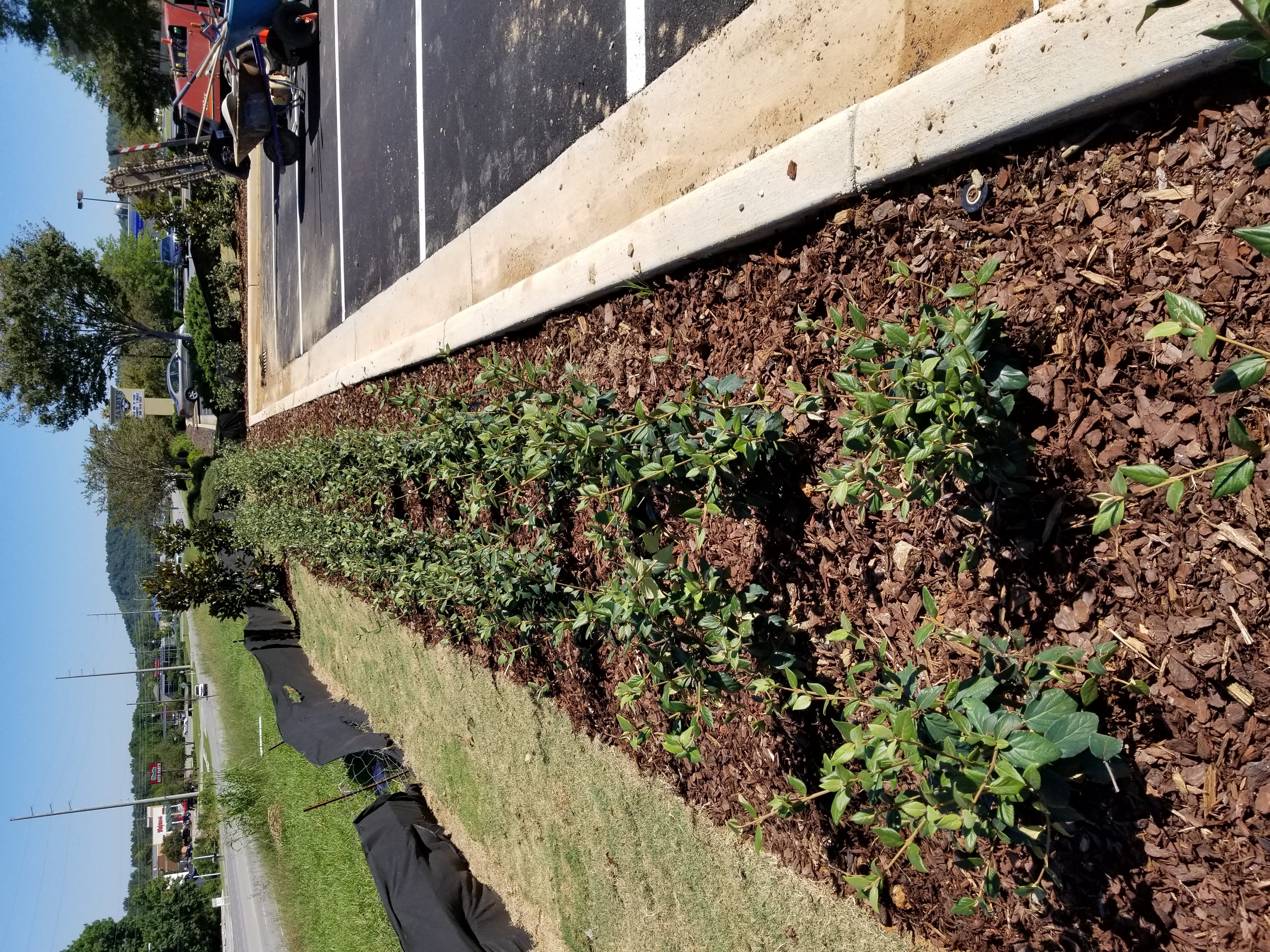 Alabaster Landscaping and Irrigation Services