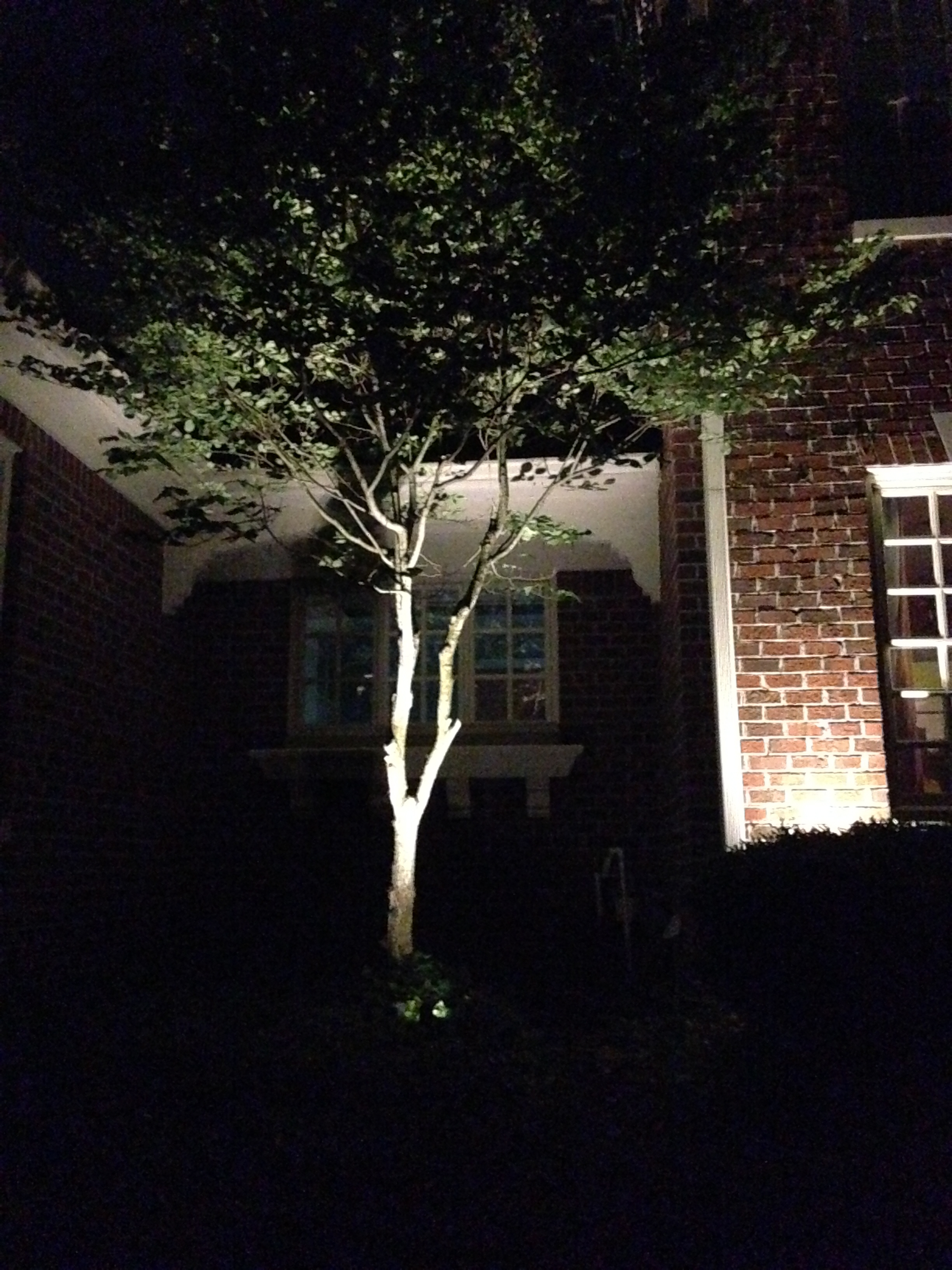 Carmel Outdoor Lighting Design