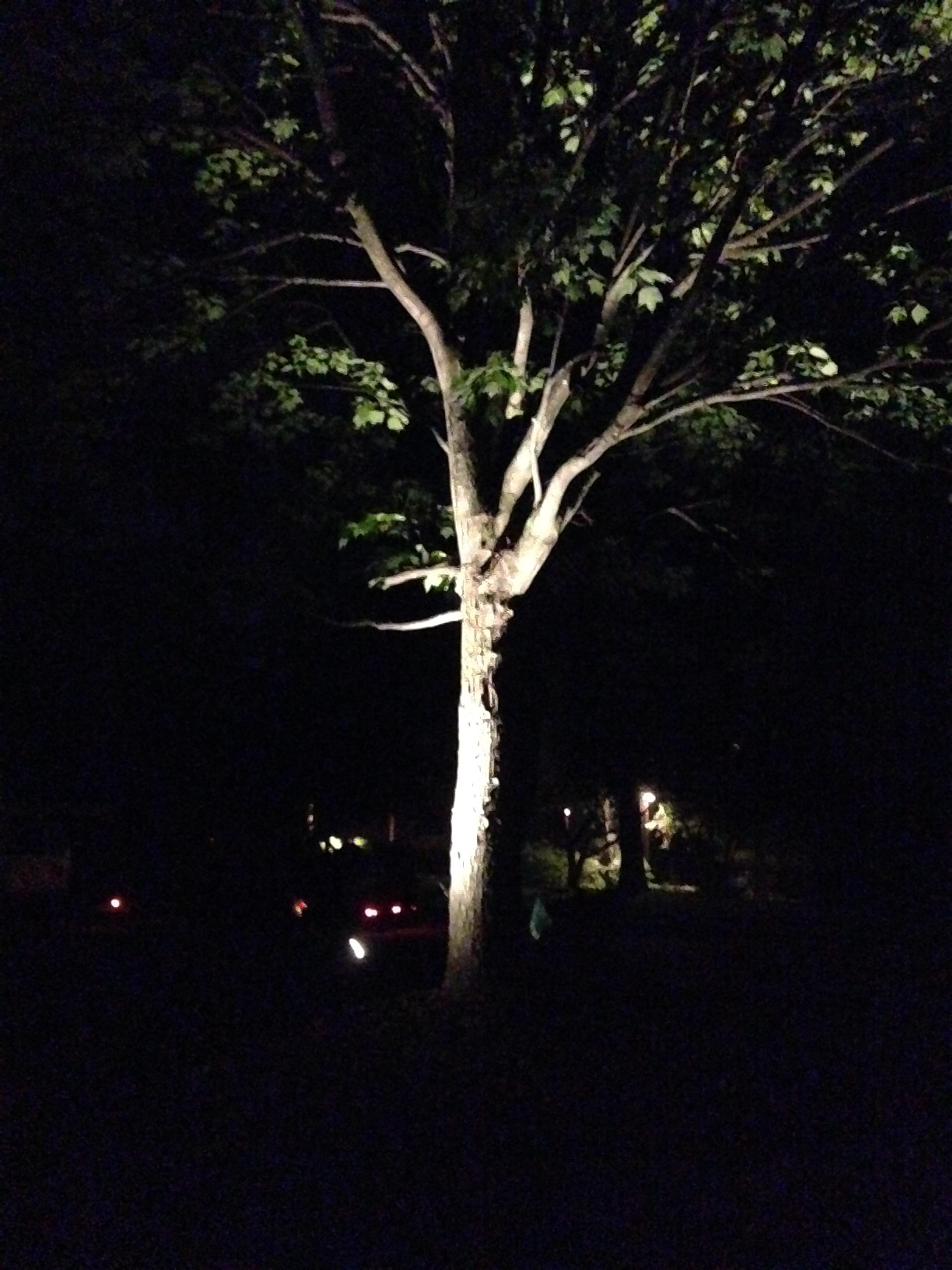 Carmel Outdoor Lighting Services