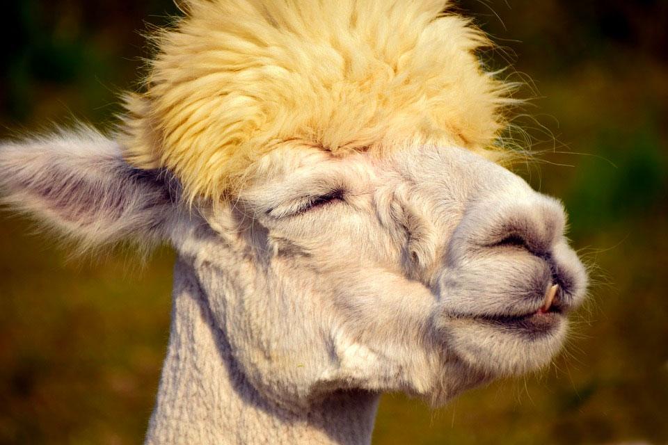 Operation Blonde Llama - Part 1