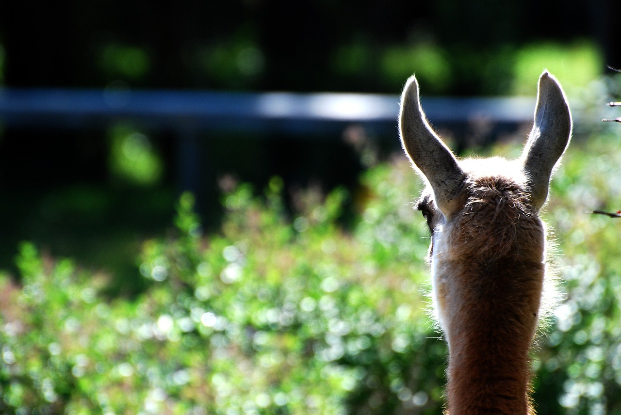 Reflective Llama