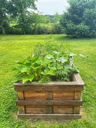 Small Vibrant Garden