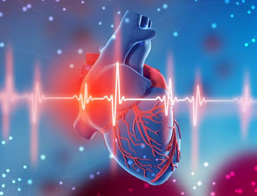 3d illustration of human heart and cardiogram